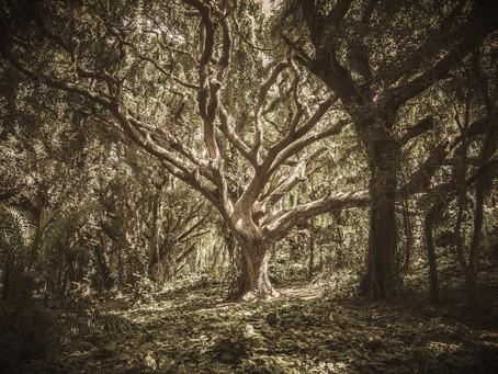 How to hear a Tree whisper