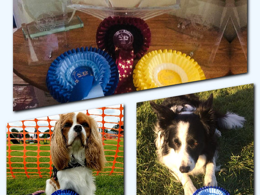 Five Rivers Agility Show - Club Results