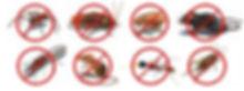美諾蟲害控制專業團隊使用先進殺蟲儀器及使用之藥品均領有漁護處註冊及許可證之安全藥劑,為香港政府註冊之專業㓕蟲公司,擁有多年豐富經驗,技術員持有香港大學頒發之「害蟲控制技術及安全課程合格証書」、專業團隊擁有多年各類蟲害控制經驗、功效顯著、成績蜚然、深受客戶讚許、服務盡心盡力、收費合理,本公司誠意為你盡心服務。    承接家居、寫字樓、學校、廠房、酒店、餐廳、食肆等滅蟲工程、新居防蟲護理、空氣淨化、除甲醛、地毯清潔服務。    專業處理蟑螂、白蟻、木蝨、床蚤、老鼠、蚊子、蒼蠅、衣魚、蜂巢移除及各類害蟲等等…    歡迎聯絡本公司查詢、上門視察環境、給予專業蟲害控制意見、免費報價。    請即致電:(852) 3592 6666/ (852) 9011 7652
