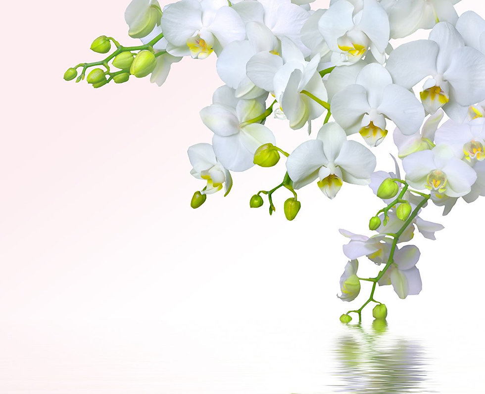 orchid over water.jpg
