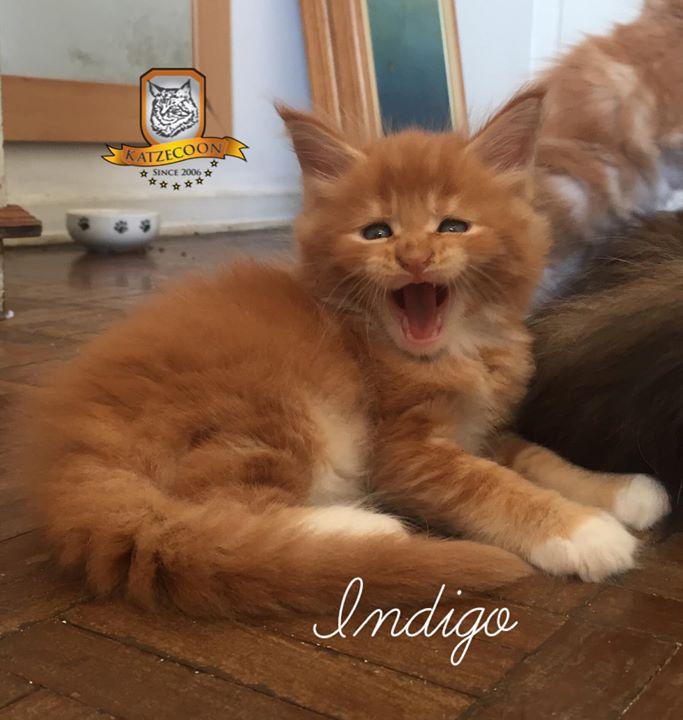 Indigo - aka Logan