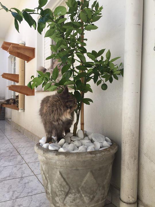 KatzeCoon