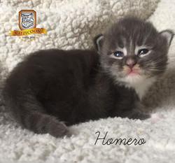 Homero - 15 dias