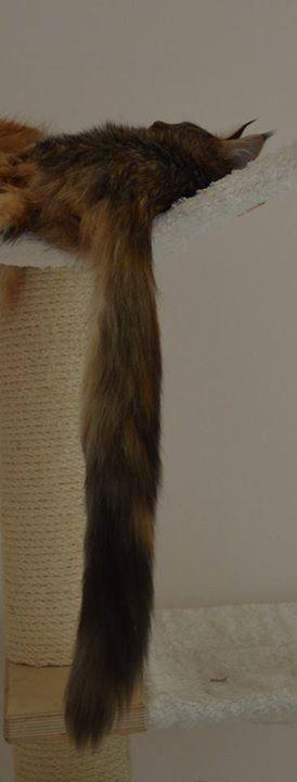 Sweetie - looong tail!!!