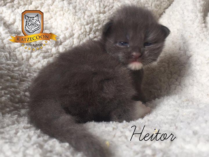 Heitor - 15 dias