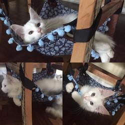 Nada como uma redinha 😹😹😹__playcatsbrinquedos  vou precisar de mais ...