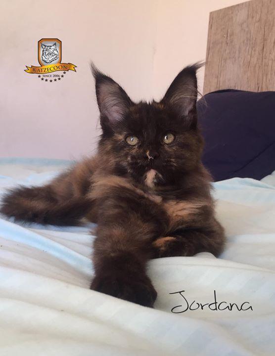 Jordana