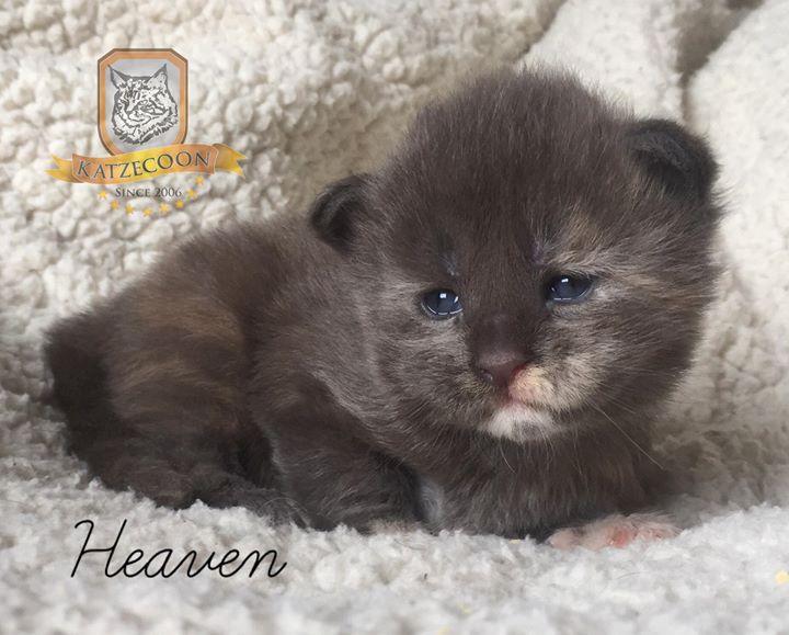 Heaven - 15 dias