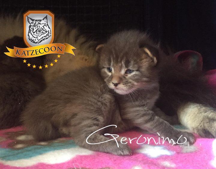 Geronimo - 15 dias