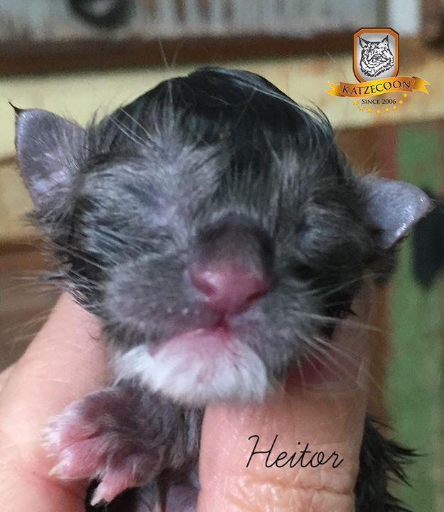 Heitor