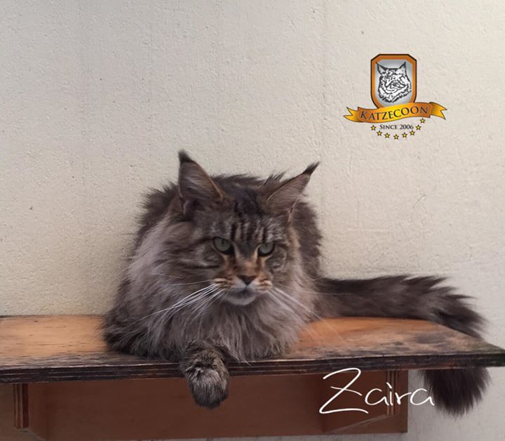 Zaira - 5 anos