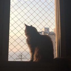...E sem pensar olhei pela janela e vi que o sol já estava a brilhar...