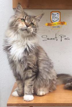 Sweet Pea - 5 anos