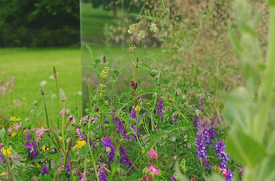 wild flower turf mirrored panel