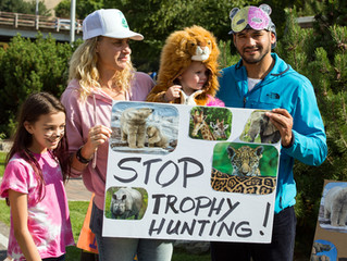 Grizzly Victory: Trophy Hunt Stopped, But Bear Deaths Skyrocket