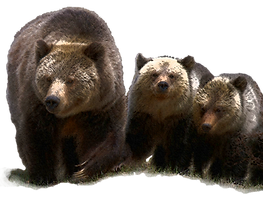 Sow wt cubs extracted_filtered.png