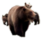 GunningDownGrizzliesTitleSlide copy.png