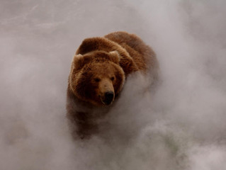 Fog of Science: The Stealth Advocacy of Grizzly Bear Numbers