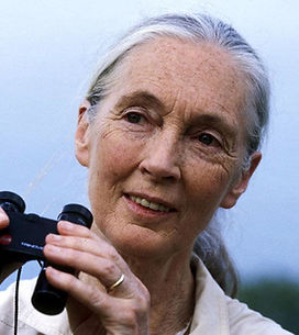 What the People Say Has to Say About Grizzly Bears - Jane Goodall