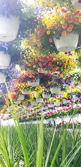 Greenhouse_edited.jpg