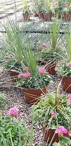 planters_edited.jpg