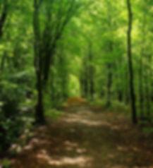 Medio-Ambiente-Equalia.jpg