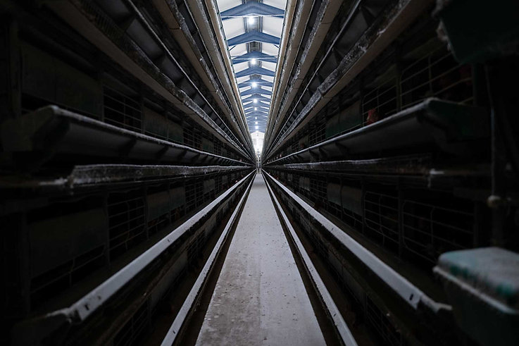 Granja_industrial_de_producción_intensi