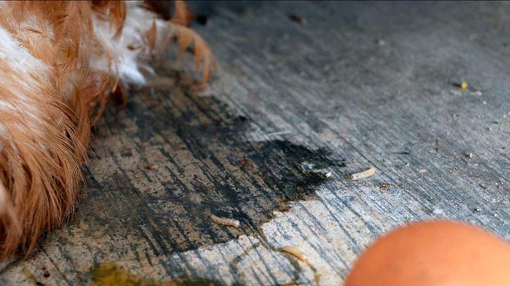 Larvas(2).jpg