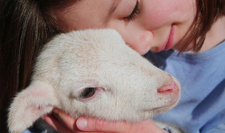 bienestar-animal-Equalia.jpg