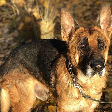 rescate-perro-Equalia.jpg