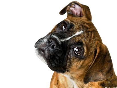 png-hd-images-of-dogs-desktop-hd-images-