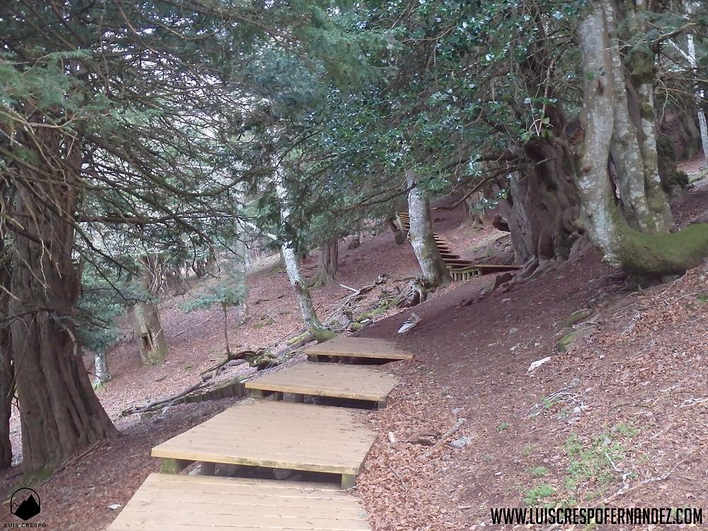 pasarelas de madera que nos indican el camino dentro de la tejeda de tosande