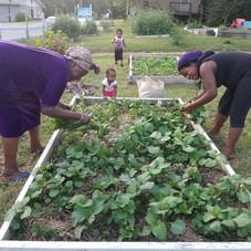 Our Garden 12.jpg