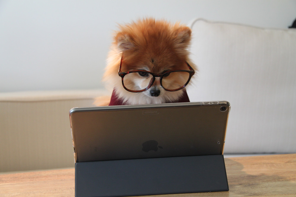 Keep your pets out of the home office
