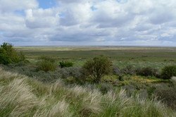 Summer marsh 7