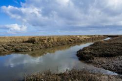 Marsh in Summer 3