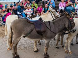 Beach Donkeys 13