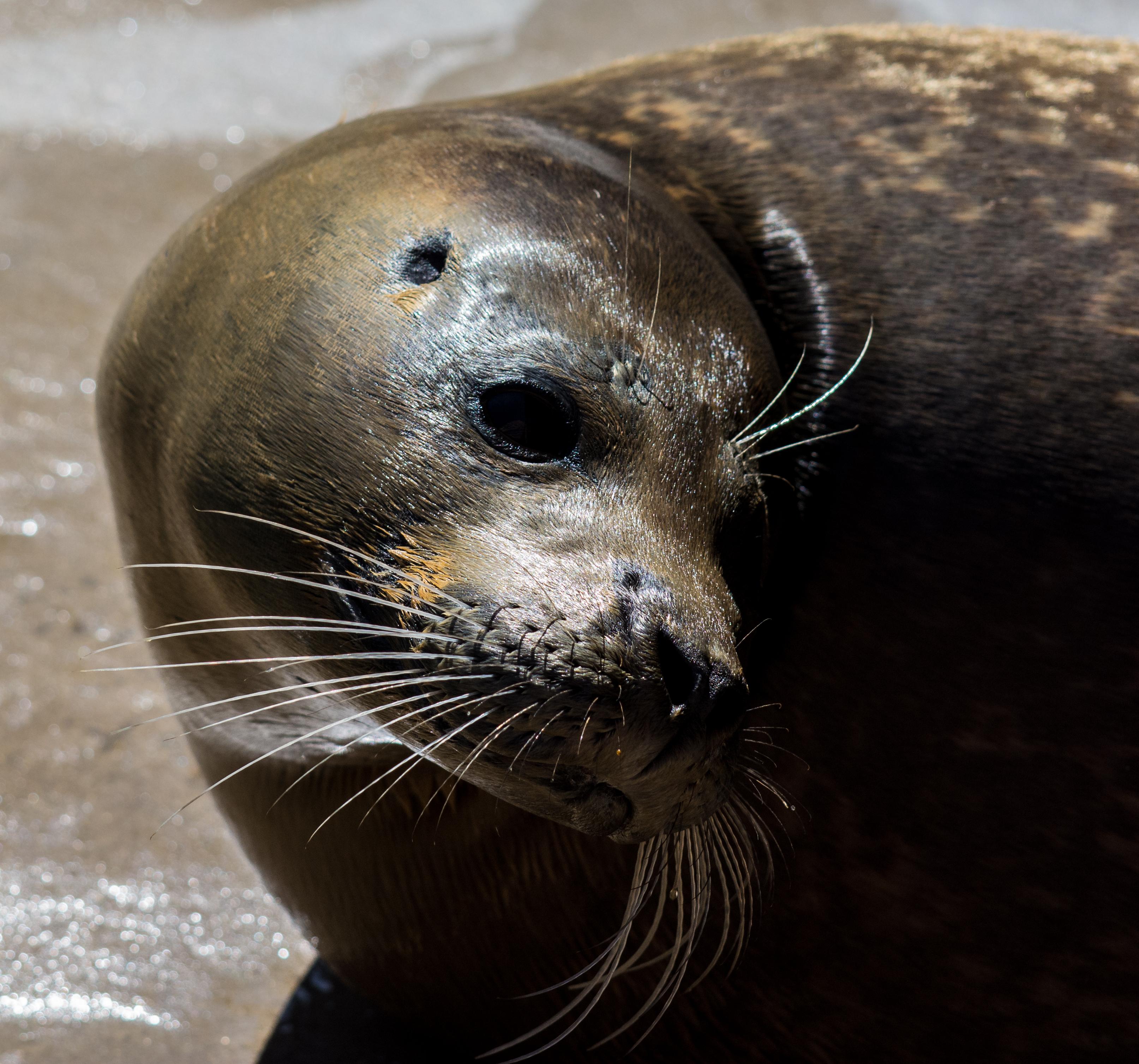 Seal 10