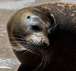 Seal 16