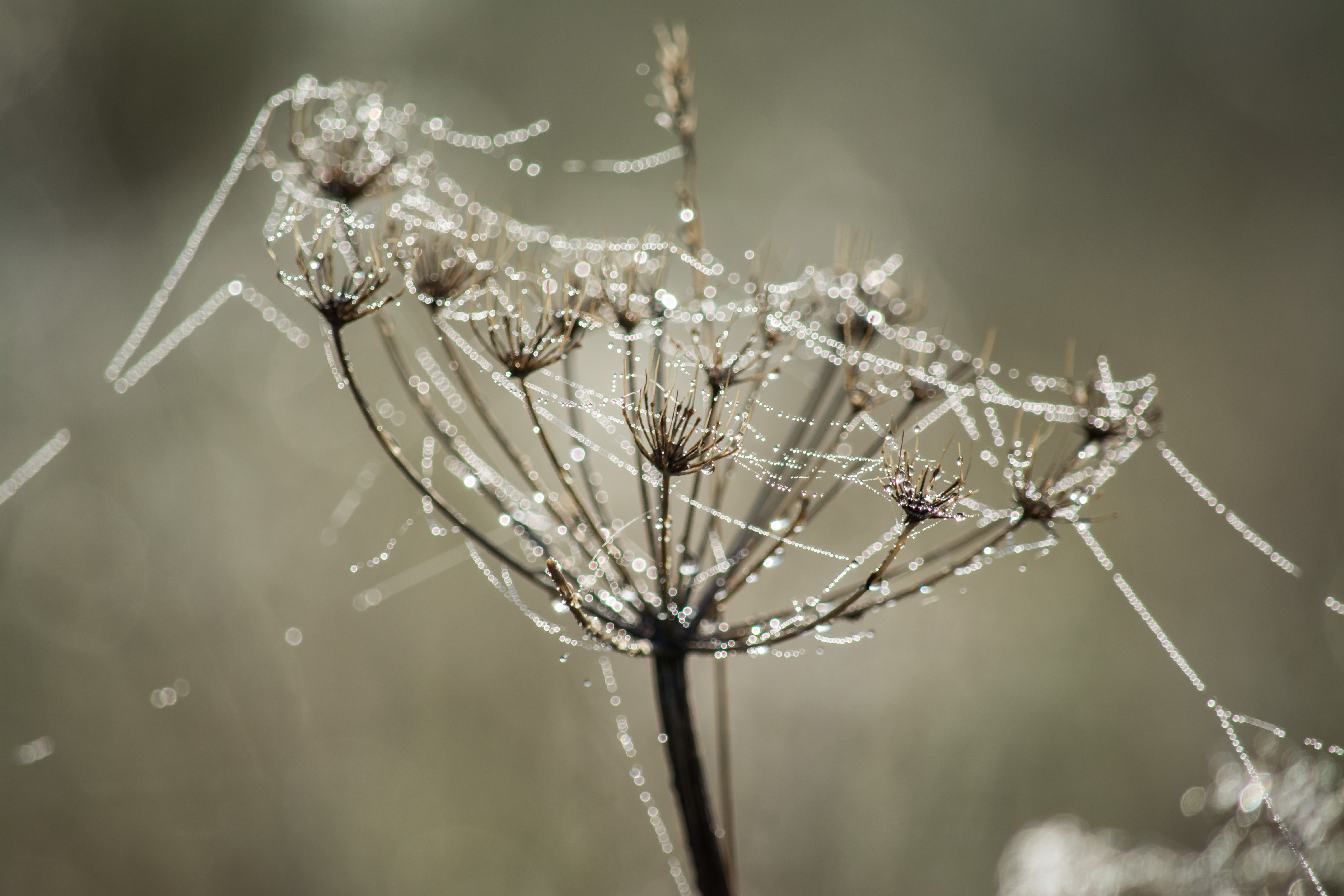 Dew and gossamer 14