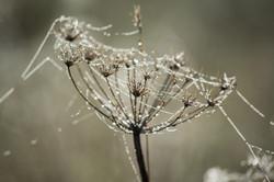 Dew and gossamer 14