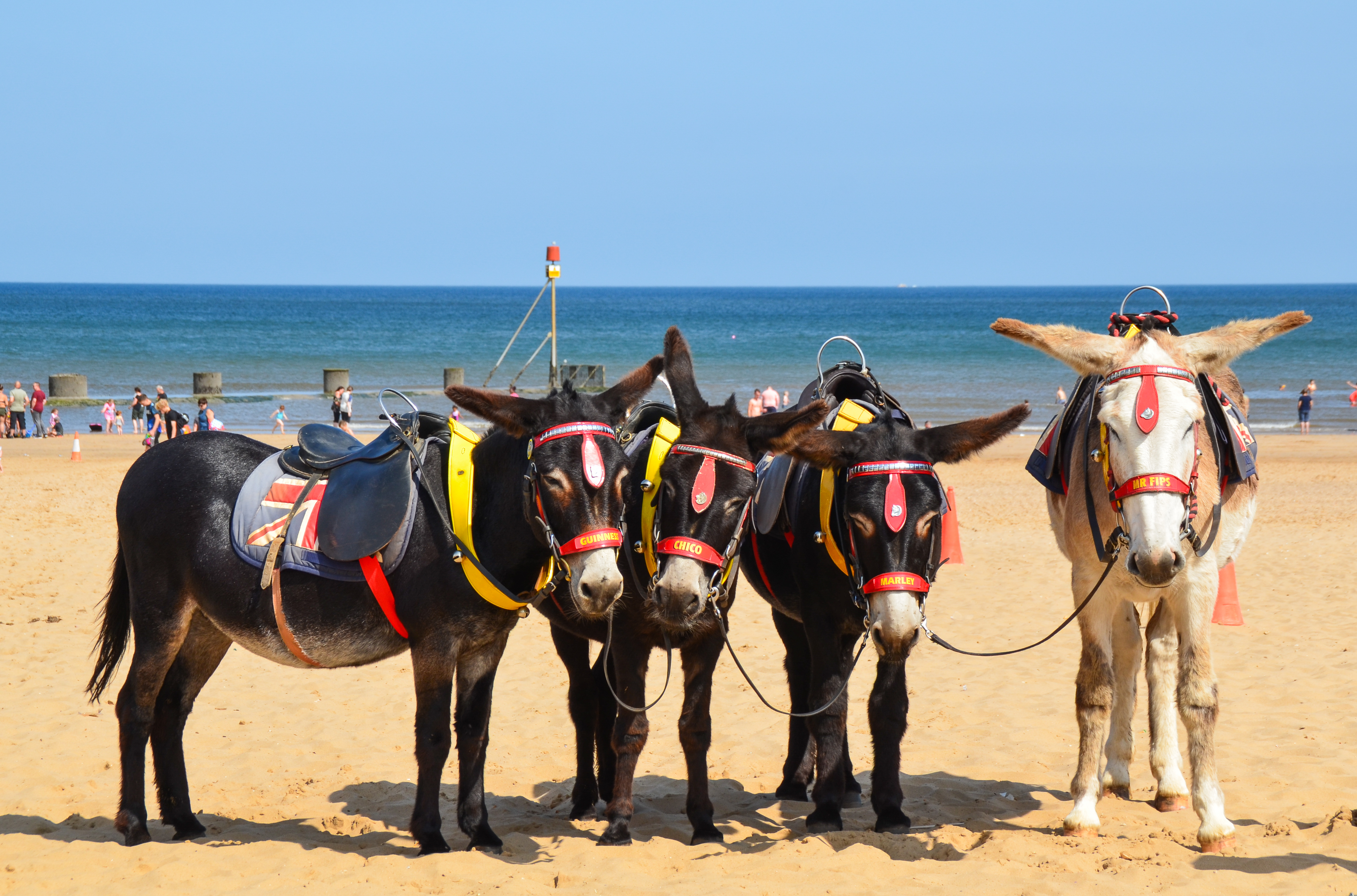 Beach Donkeys 2