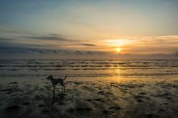 Dog on Dawn beach 28