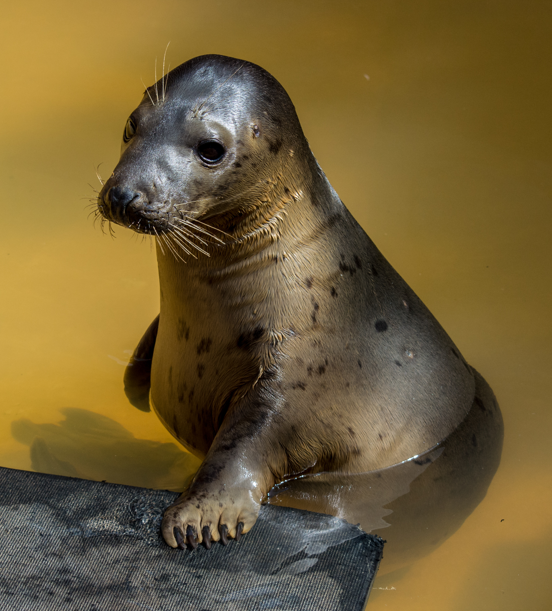 Rescued Seal 5