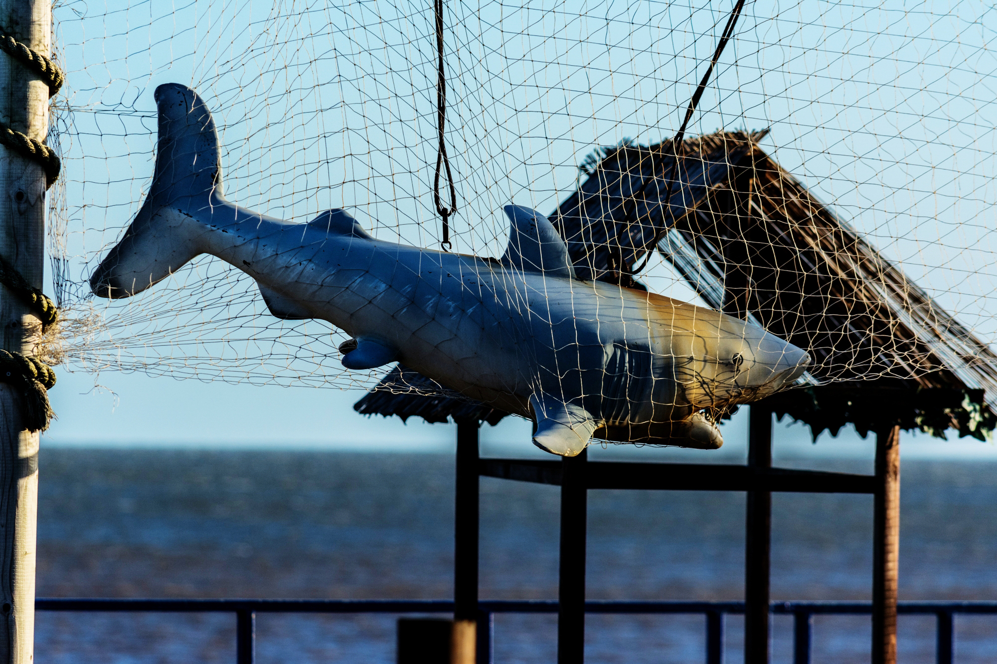 Shark 19