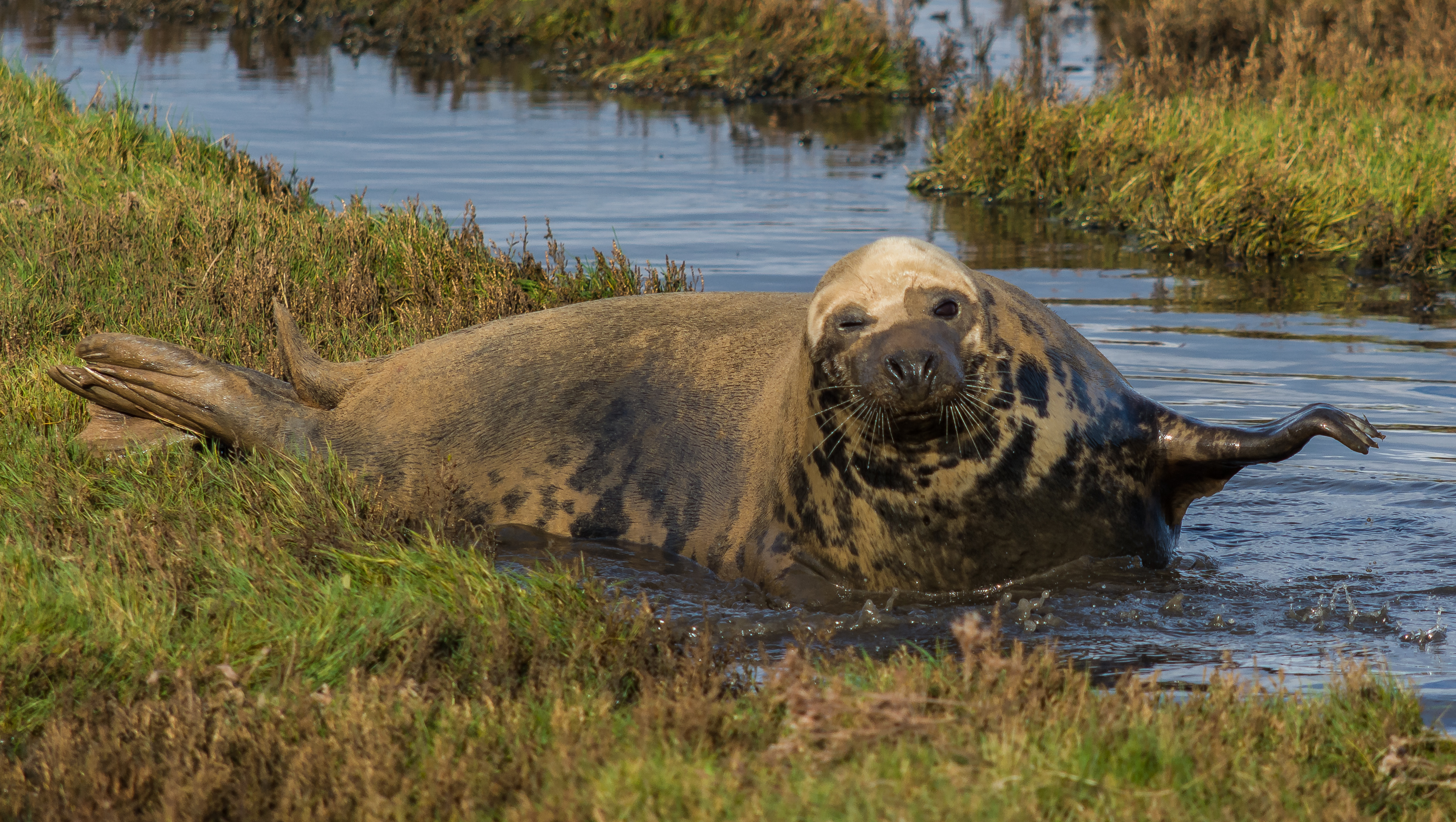 Donna Nook Seal 6