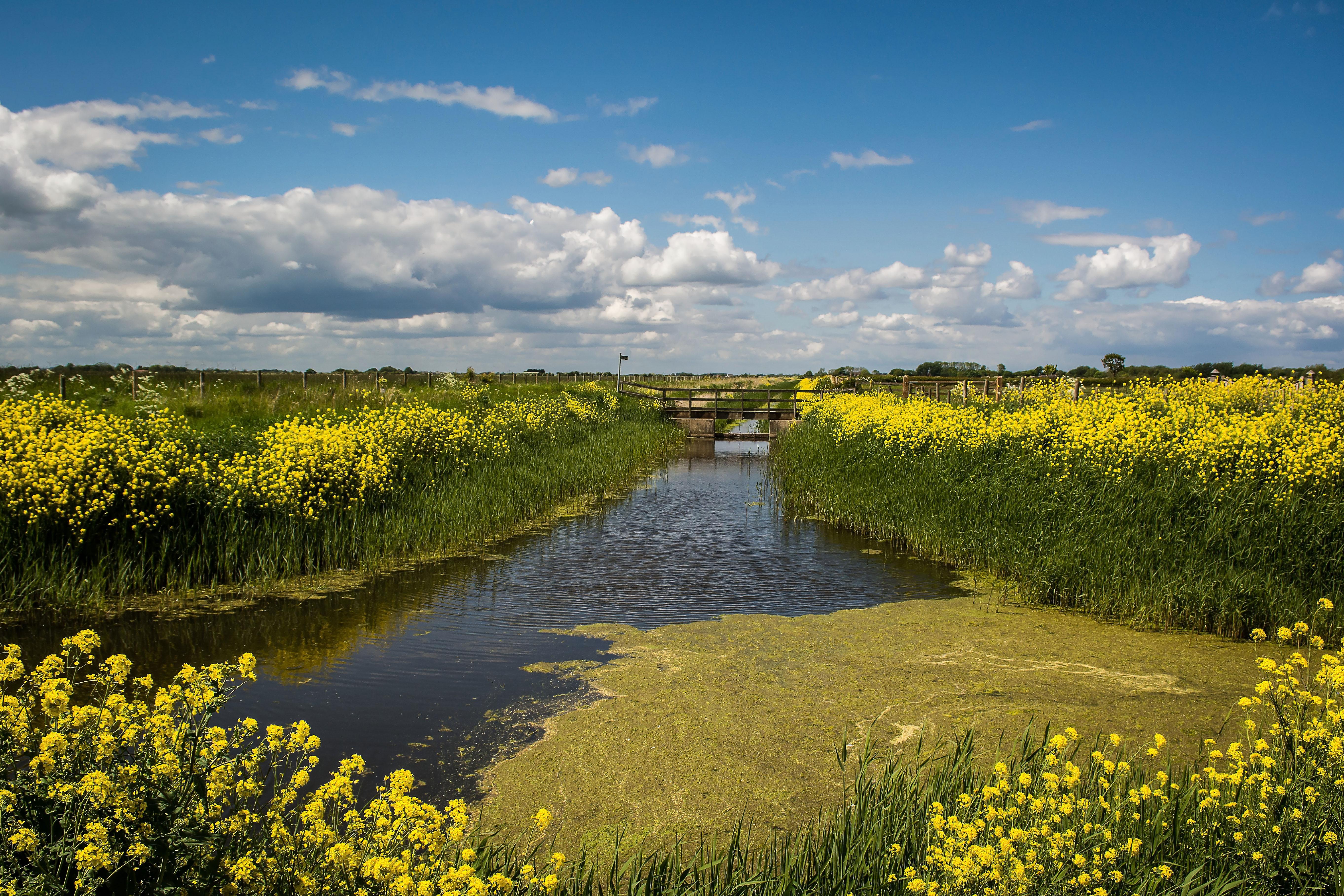 Spring marsh 15