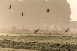 Deer and curlews 10