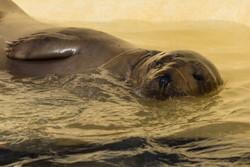 Seal 13