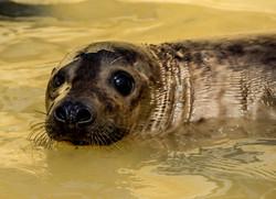 Seal Sanctuary 3